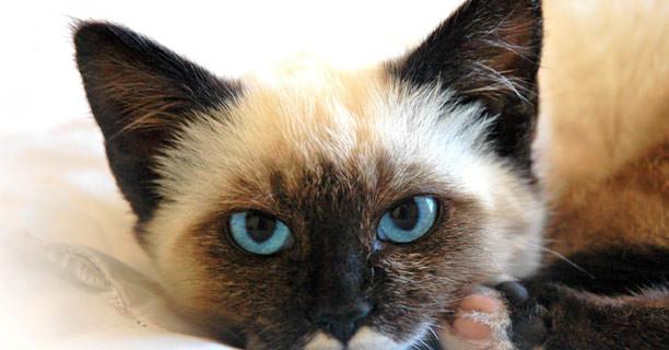 Campaña de diagnóstico precoz de la Leucemia e Inmunodeficiencia felina
